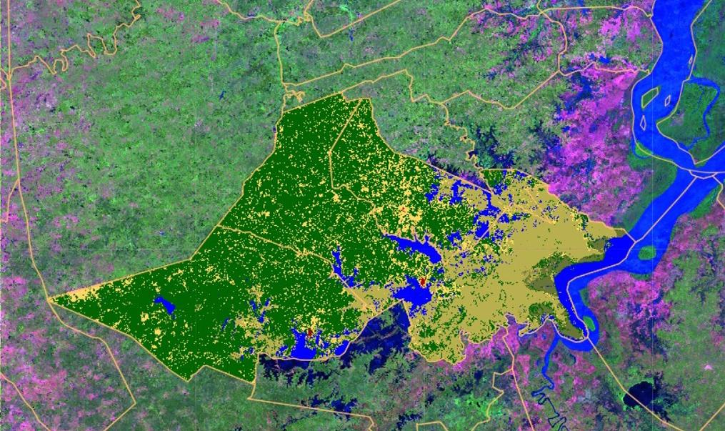 Transição de área de floresta em verde escuro
